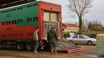 Le transport d'animaux interdit pendant la canicule