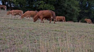 Les éleveurs de 24 départements vont avoir le droit de faucher les jachères