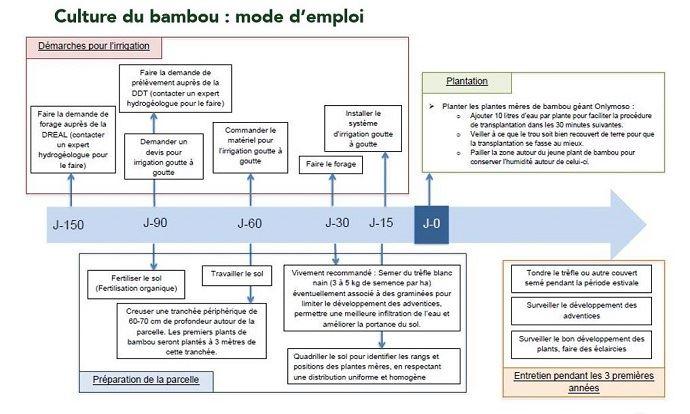 Mode d'emploi de la culture du bambou géant