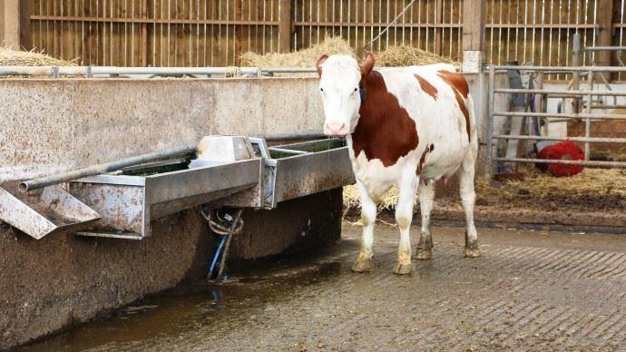 eau et vache