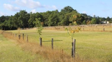 Un gain de GMQ moyen plus important avec la présence d'ombre dans les prairies