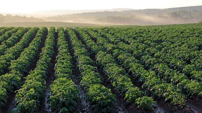 La production de pommes de terre de conservation est attendue par l'UNPT entre 6,2 et 6,7 Mt en 2019.