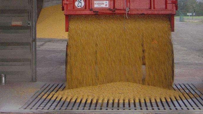 Remorque de céréales en vidange dans une fosse de coopérative