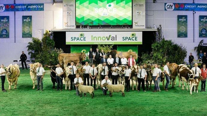 750 animaux fouleront le ring du Space 2019, dont 550 bovins de 13 races différentes?