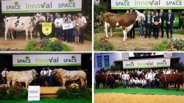 Tous les palmarès, replays et photos des concours bovins