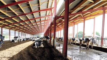 Un bon logis est favorable à l'animal, à l'éleveur et à la productivité de tous