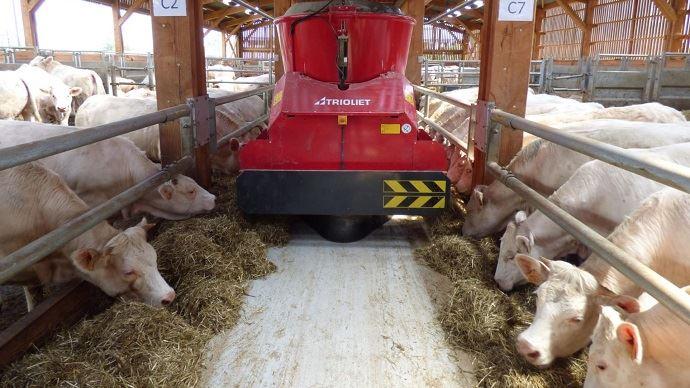 La finition des vaches de réforme du troupeau allaitant est étudié à la ferme expérimentale des Bordes par Arvalis sur le troupeau de Charolaises.