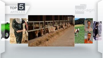 L'alimentation des bovins sur le devant de l'actu cette semaine
