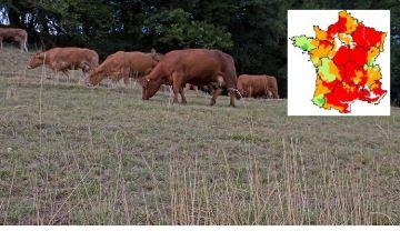82% des régions avec une pousse d'herbe déficitaire sur cette campagne