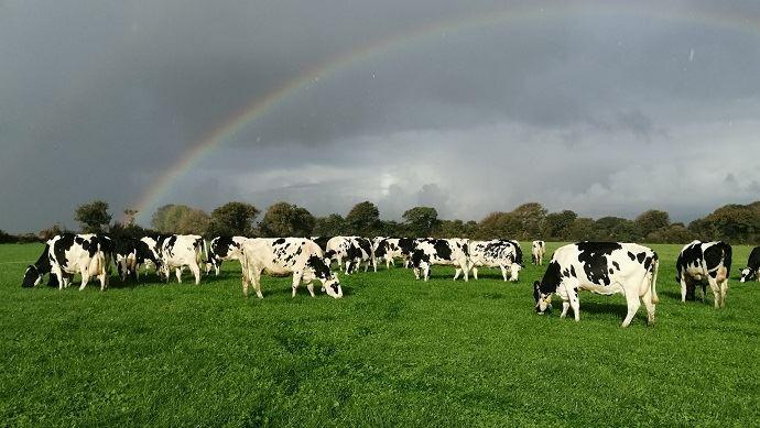 Pâturage d'automne vaches laitières