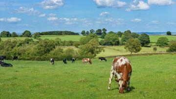 Dialecte, un outil de diagnostic environnemental en agriculture bio