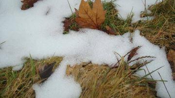 Profiter du repos végétatif de la prairie pour préparer la prochaine saison