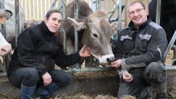 Moitié Brune, moitié Holstein pour un troupeau productif et facile à conduire