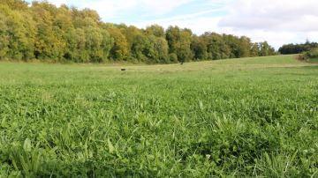 Concevoir et aménager ses prairies en faveur du pâturage tournant dynamique