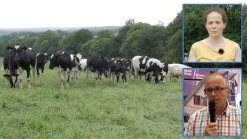 Produire écolo et gagner plus: le double défi de la ferme de Trévarez