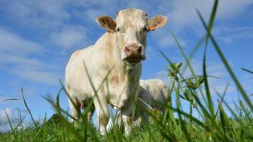 Remettre l'herbe au c½ur des élevages en zones céréalières