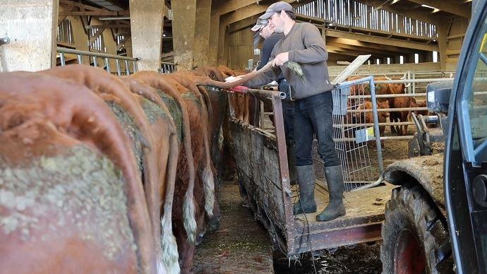 Bricolage d'éleveur: une nacelle sur le télescopique pour intervenir sur les animaux en toute sécurité.