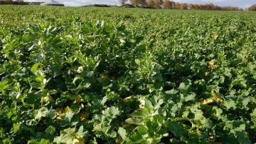Combiner les leviers agronomiques pour réduire les intrants