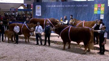 Deux bêtes corréziennes Juliuse et Malibu dominent le concours Limousine