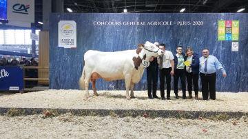 Jupline termine championne adulte du concours Montbéliarde