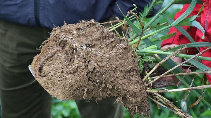 Mottes de terre