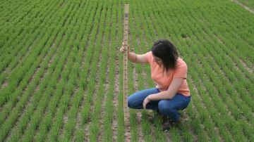 Des paramètres à maîtriser dès le semis pour assurer la rentabilité