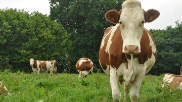 Des performances techniques à la hausse dans les élevages laitiers