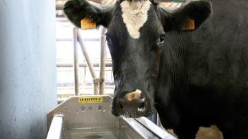 Plus de capacité et desécurité pour bien hydrater le troupeau