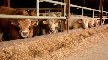 Les éleveurs appelés à suspendre leurs ventes