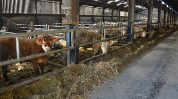 «Retenir les animaux en fermes: plus facile à dire qu'à faire»