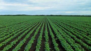 Le Brésil confiant dans le maintien de ses exportations de soja vers la Chine