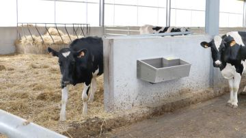 Easy Stall: l'abreuvoir inox mural conçu pour les vaches laitières
