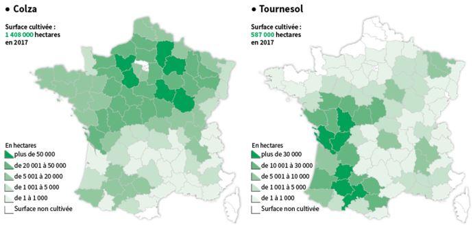 Production de colza et tournesol en France en 2017