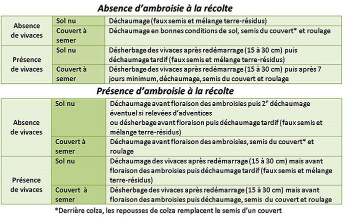 Différentes stratégies de lutte selon la présence d'ambroisie et/ou de vivaces