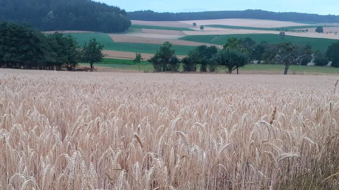 La moisson a démarré en Allemagne et les prévisions s'améliorent