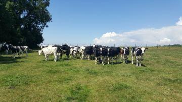 L'essentiel à savoir pour protéger son troupeau des coups de chaud
