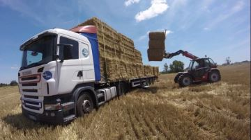 70% des éleveurs risquent de manquer de paille