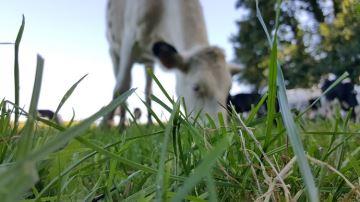 Après un été bien sec, que peut-on espérer de la pousse d'herbe à l'automne?