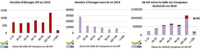 L'insémination par l'éleveur en France (IPE) : les chiffres de 2019