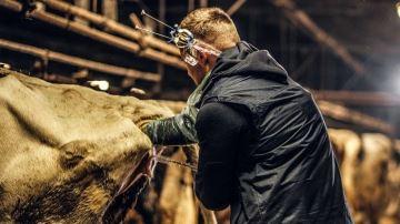 Le nombre d'éleveurs-inséminateurs ne cesse de croître