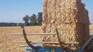 Presser les cannes de maïs: une alternative à la paille