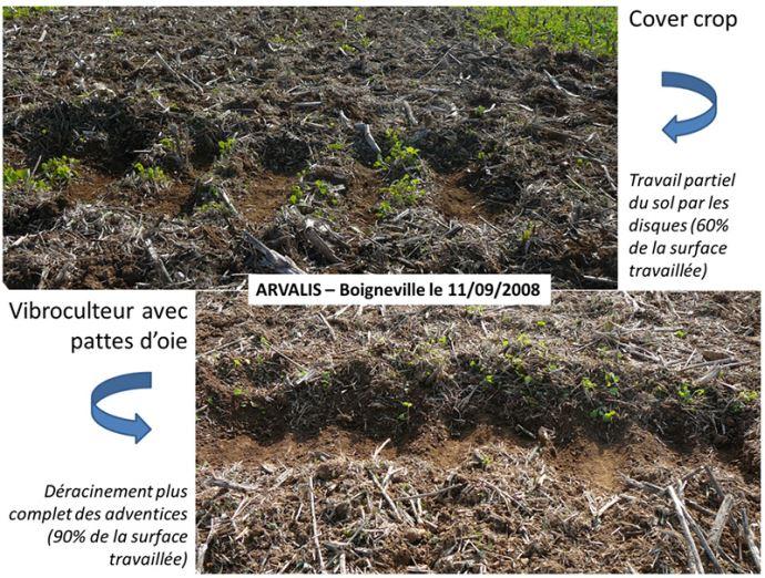 Effets du cover crop et du vibroculteur avec pattes d'oie
