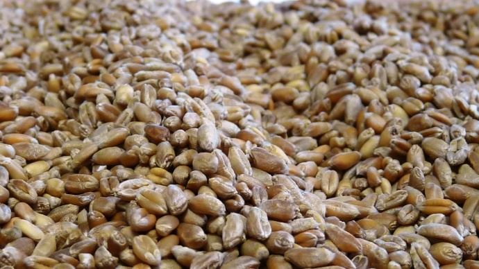 Le blé, à Chicago, a atteint son plus haut depuis 2014.