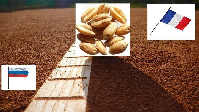 Le blé français prendrait l'avantage sur son concurrent russe