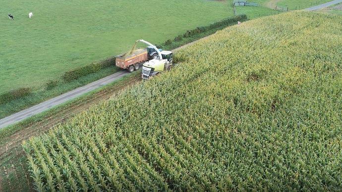 Ensilage de maïs 2020