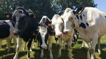 Pour les éleveurs, quels apports de lagénomique?