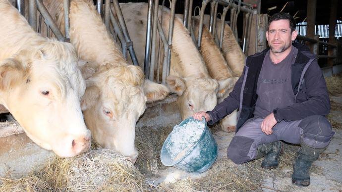 Christophe Baudouin et ses charolaises