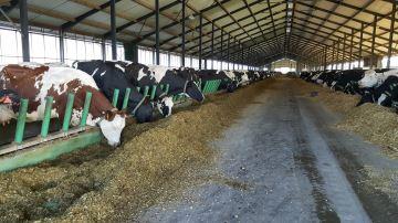 Coup d'arrêt définitif pour la «ferme des 1000 vaches» dans la Somme