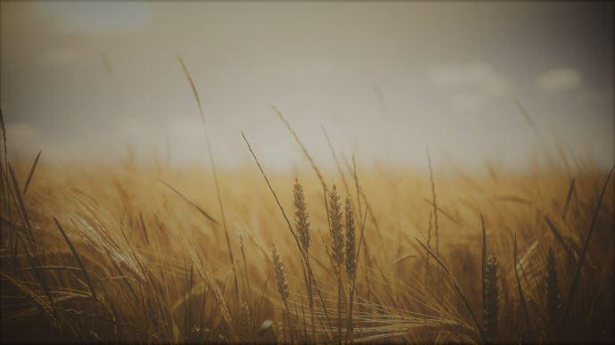 Un crédit d'impôt temporaire a été créé pour les exploitations agricoles sortant du glyphosate en 2021 et/ou 2022