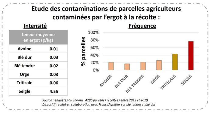 Etude des contaminations de parcelles agriculteurs contaminées par l'ergot à la récolte